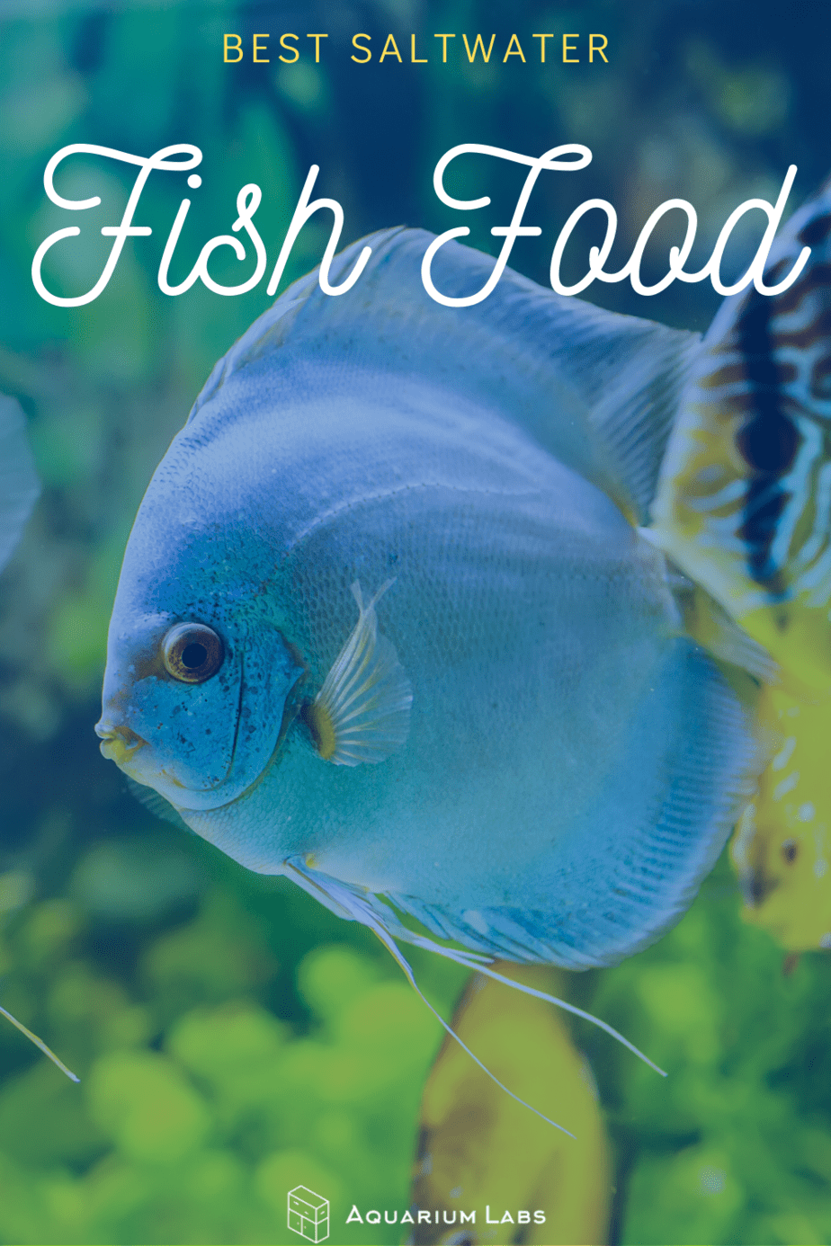 best saltwater fish food