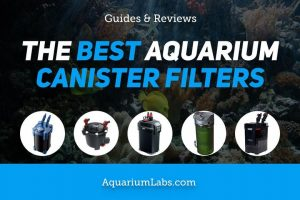 Best Canister Filters for Aquariums