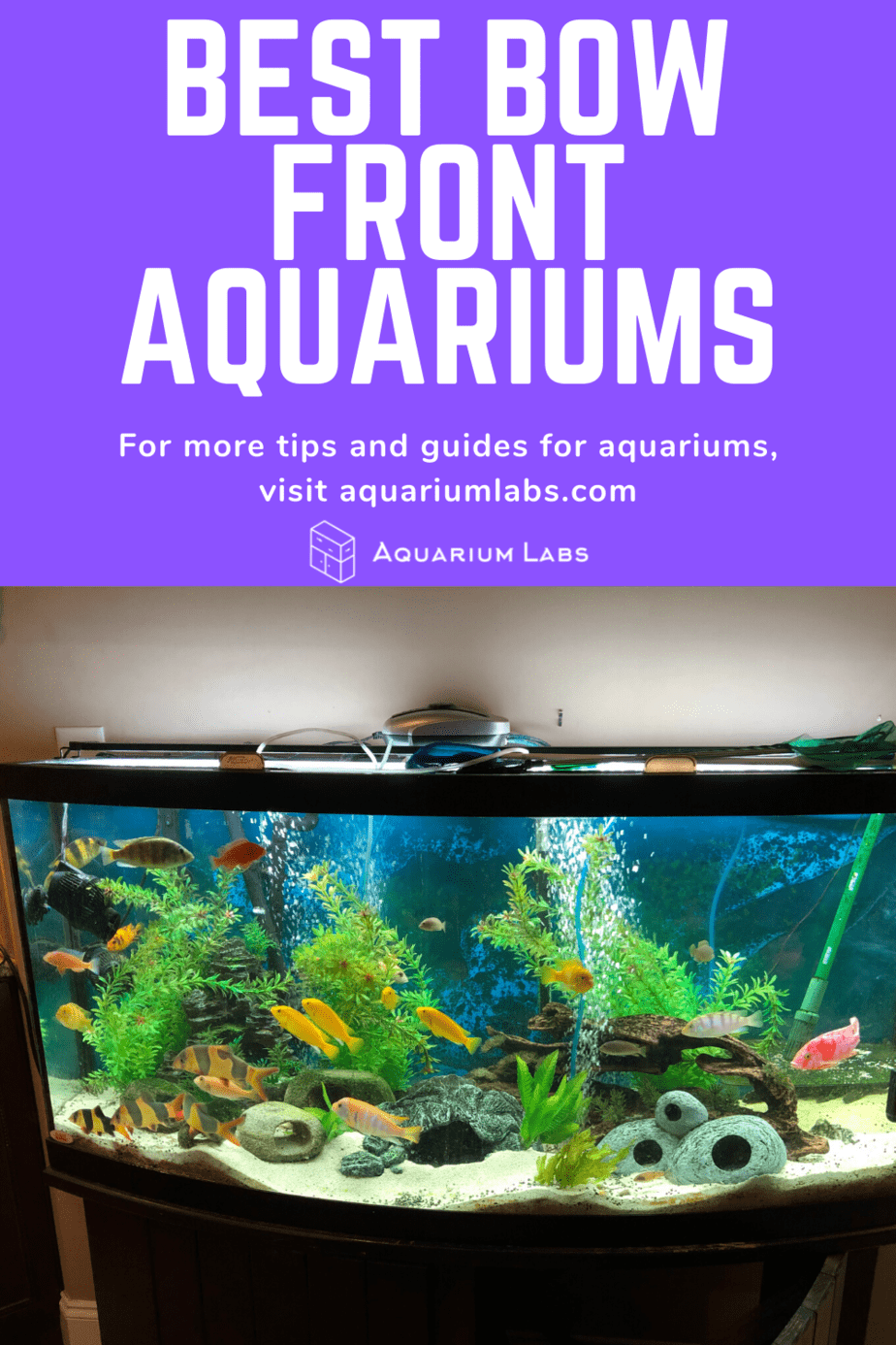 best bow front aquariums pin 1