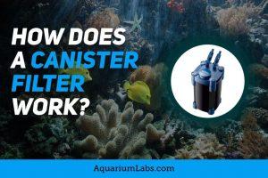 How Does a Canister Filter Work