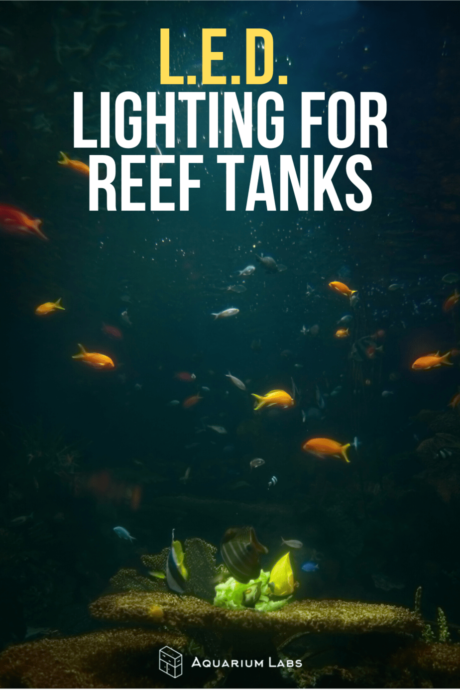LED Lighting for Reef Tank