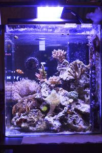 Nano Reef Tank with led lighting