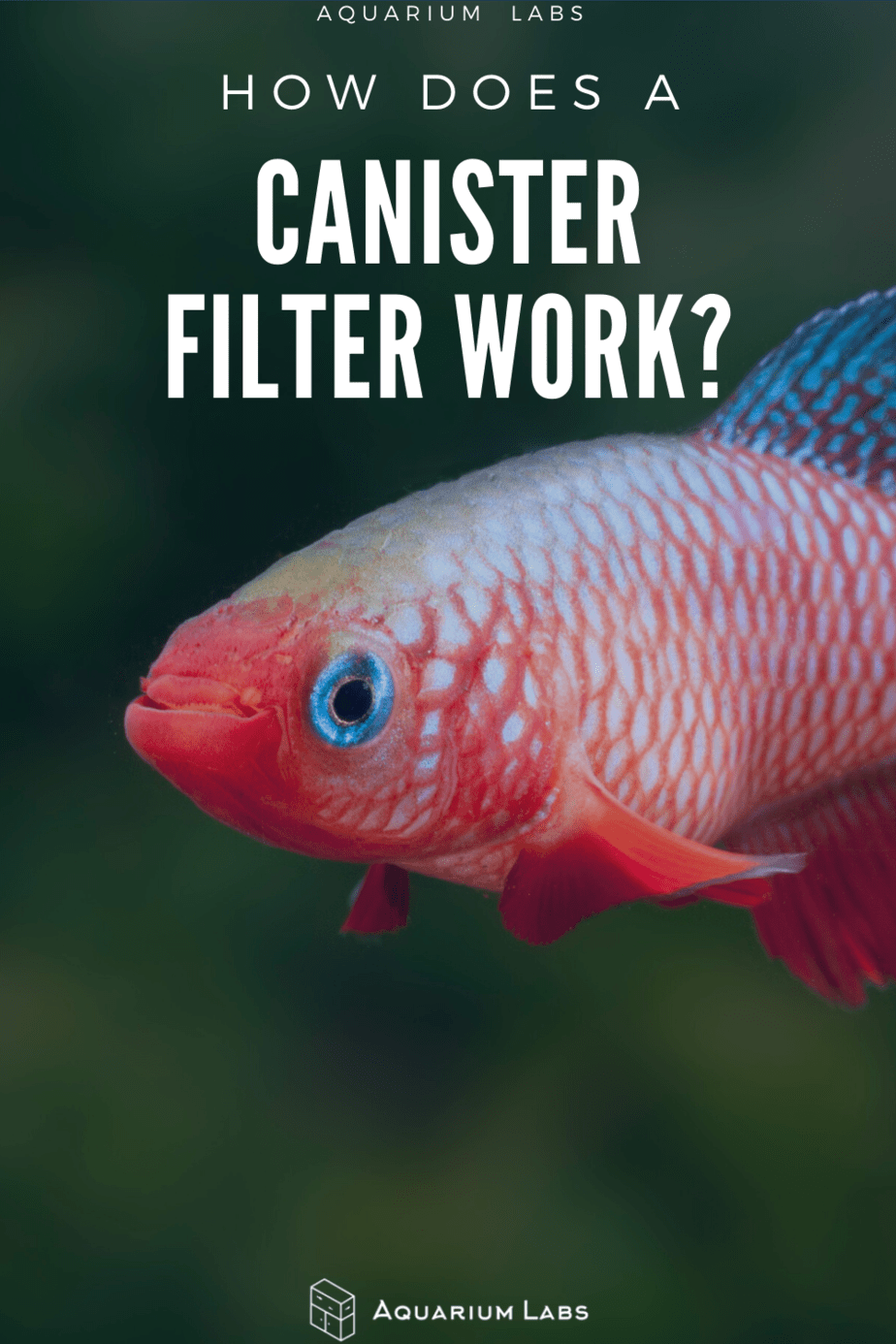 how a canister filter works