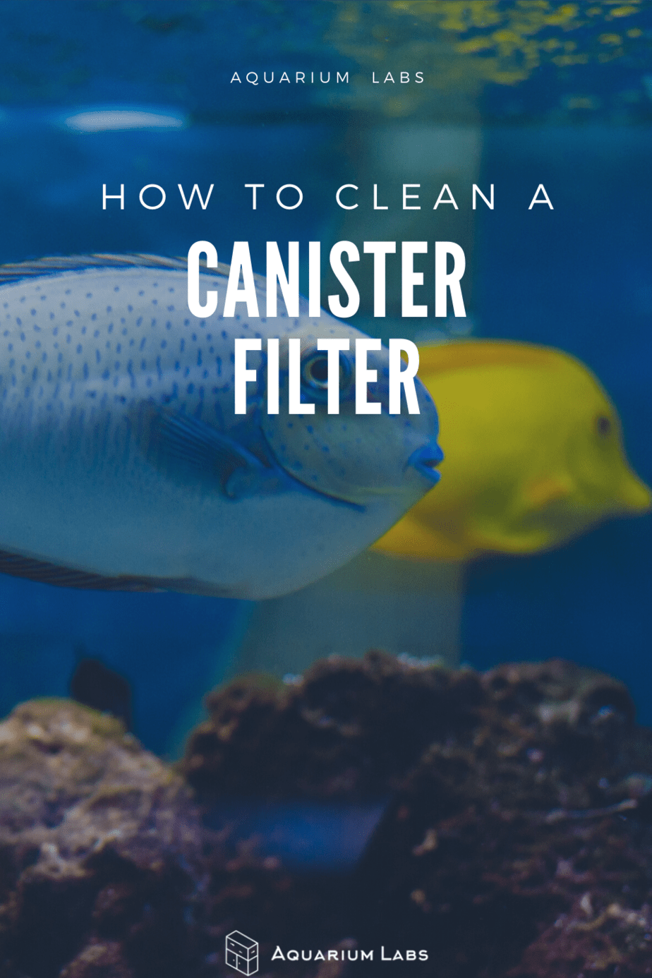 how to clean a canister filter