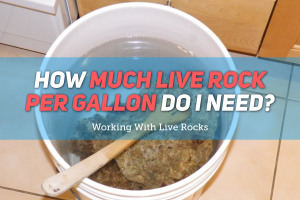 How Much Live Rock Per Gallon - Featured Image