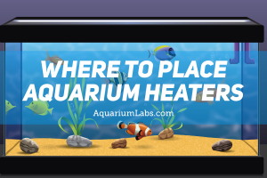 Where to Place Aquarium Heaters