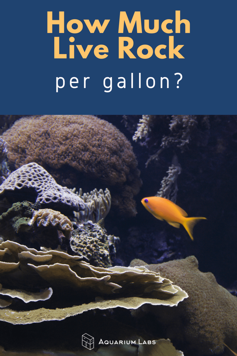 how much live rock per gallon