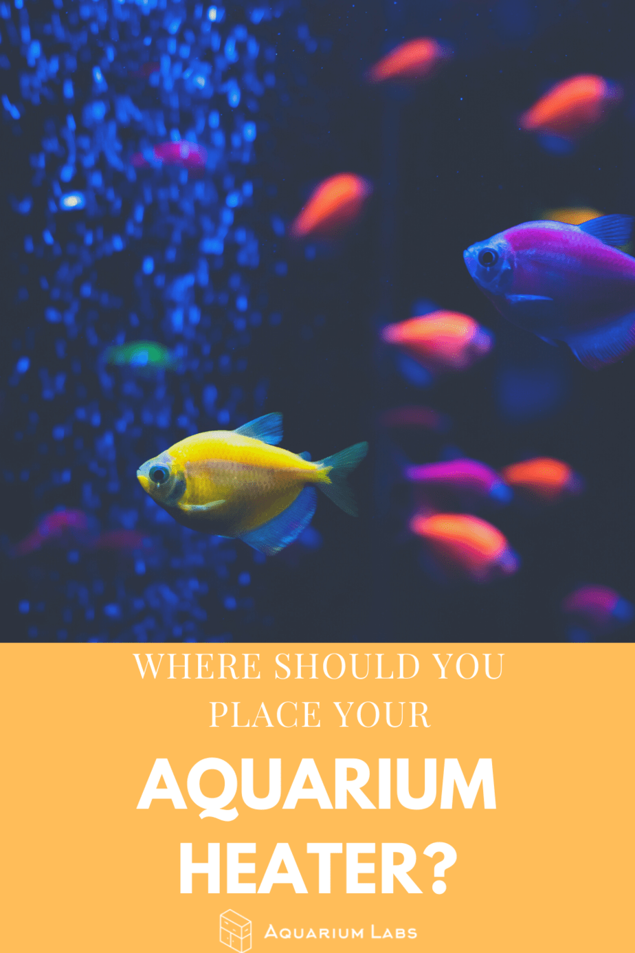 where should you place your aquarium heater