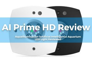 AI Prime HD Review - Featured Image