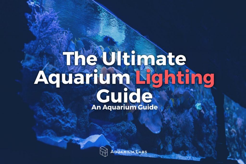 Aquarium Lighting Guide - Featured Image