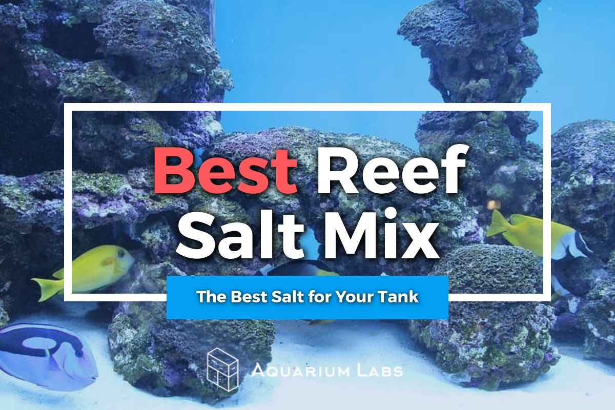best reef salt