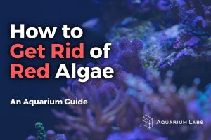 How to Get Rid of Red Algae - Featured Image