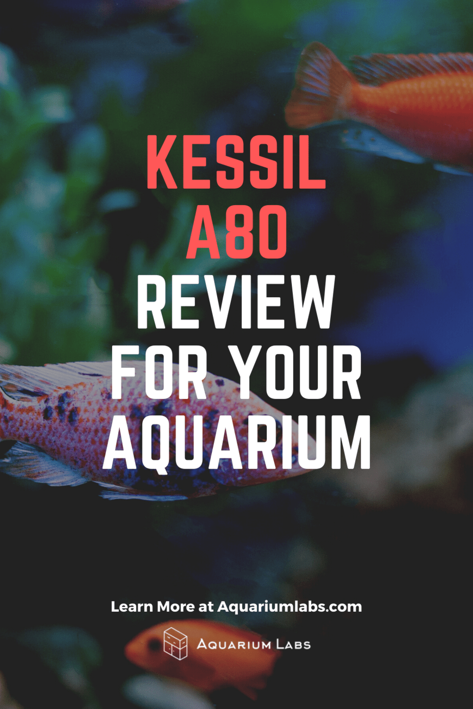 kessil a80 review