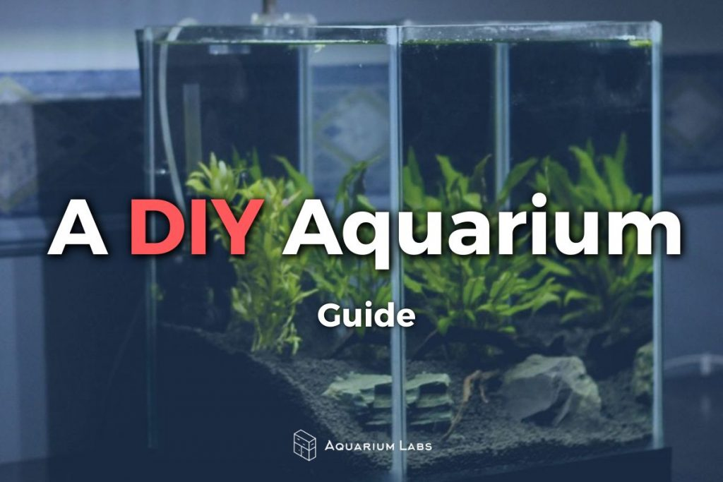 DIY-Aquarium-Featured-Image