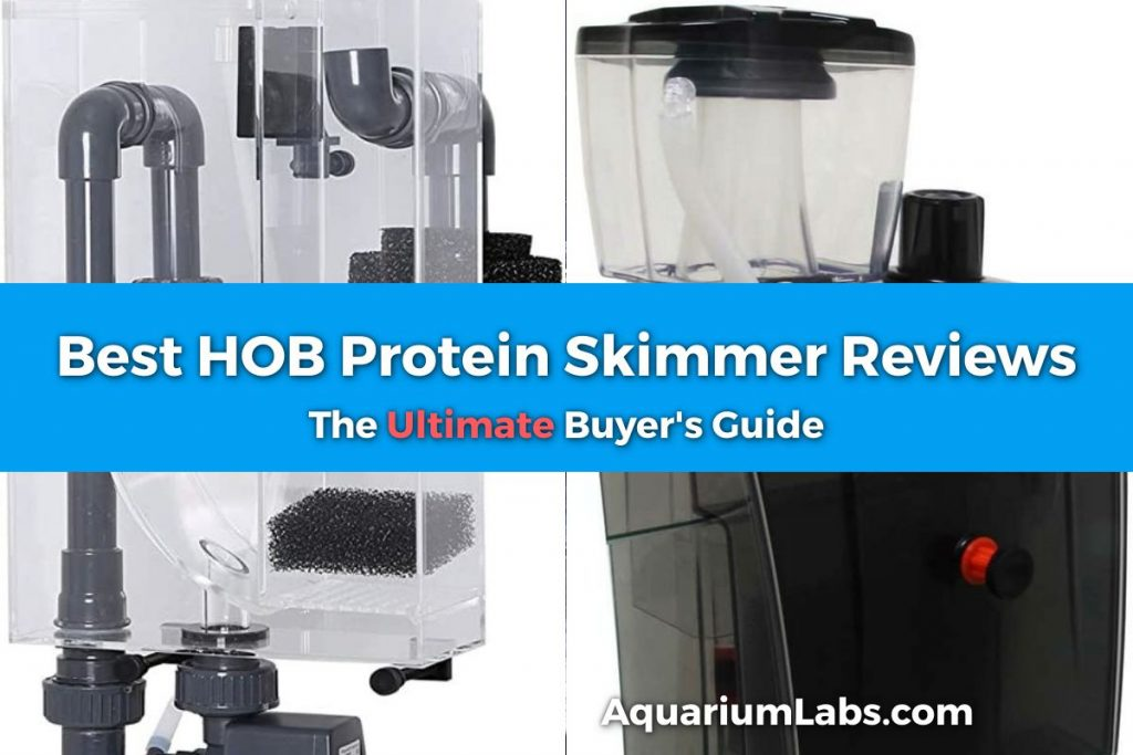 Best HOB Protein Skimmer Featured Image
