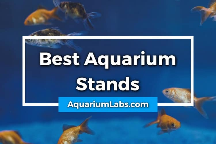 Best Aquarium Stands Featured Image