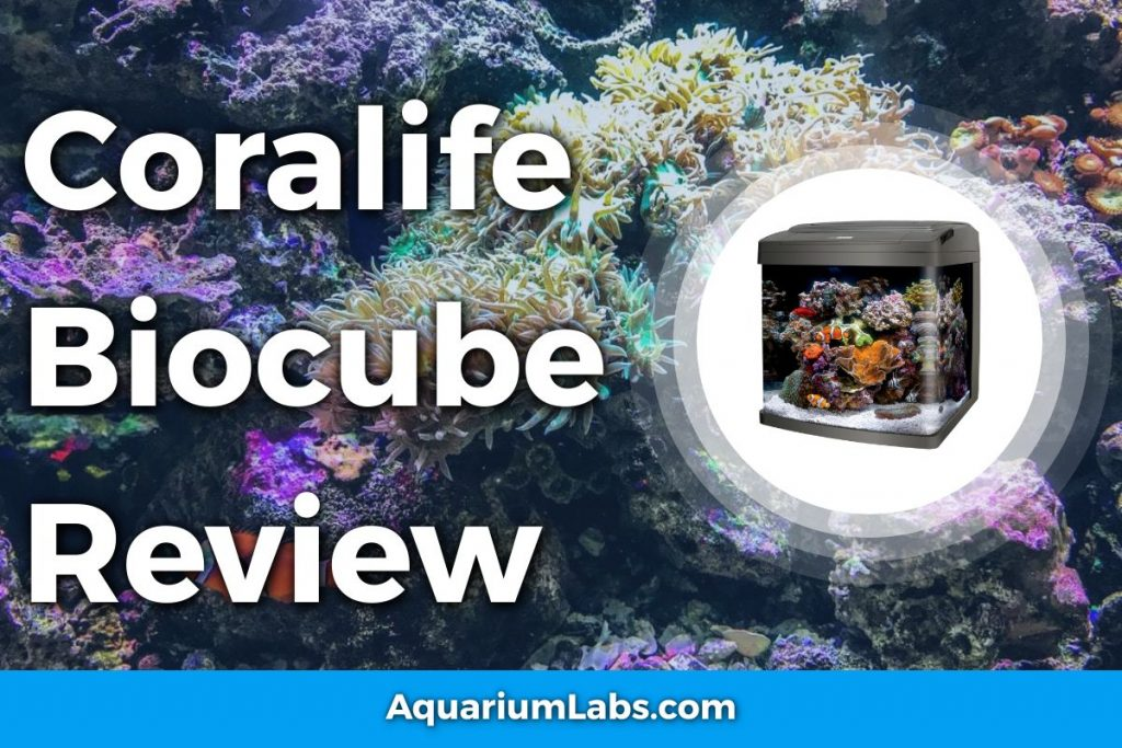 CoralifeBiocube 32 Review
