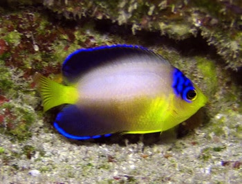reef safe fish