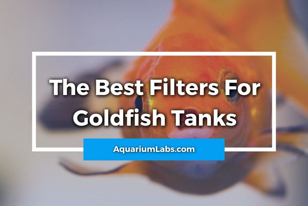 Best Filter for Goldfish Featured Image