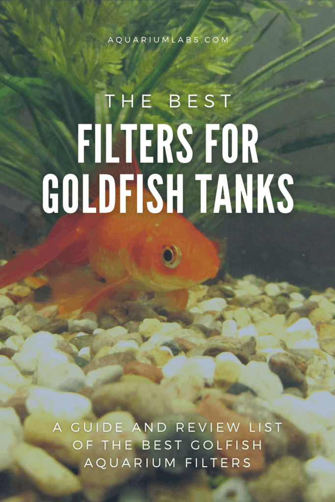 Best Filters for Goldfish Tanks - Pinterest Share Image