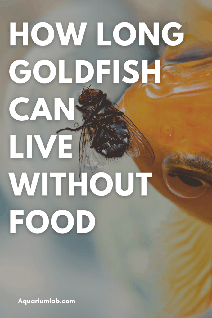 How Long Goldfish Can Survive Without Food Pinterest Image