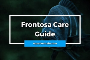 frontosa care guide