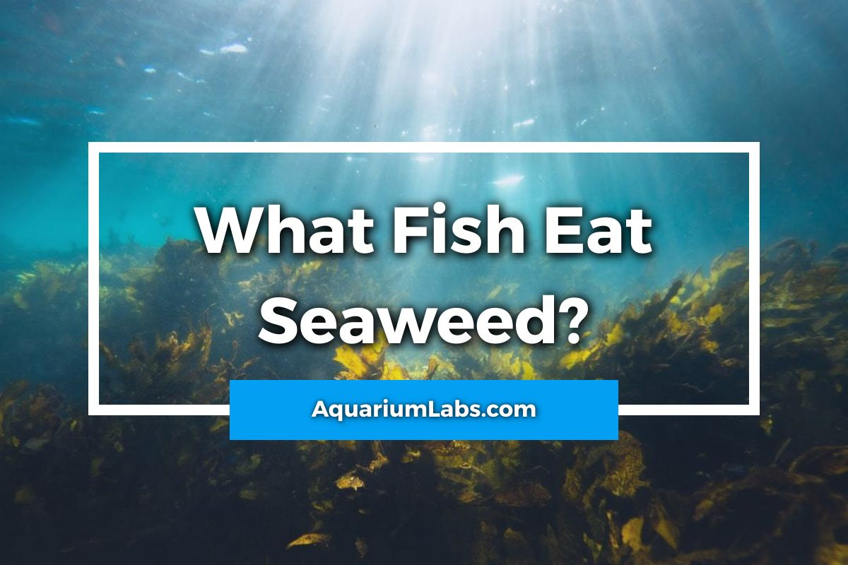 What Fish Eat Seaweed - Featured Image
