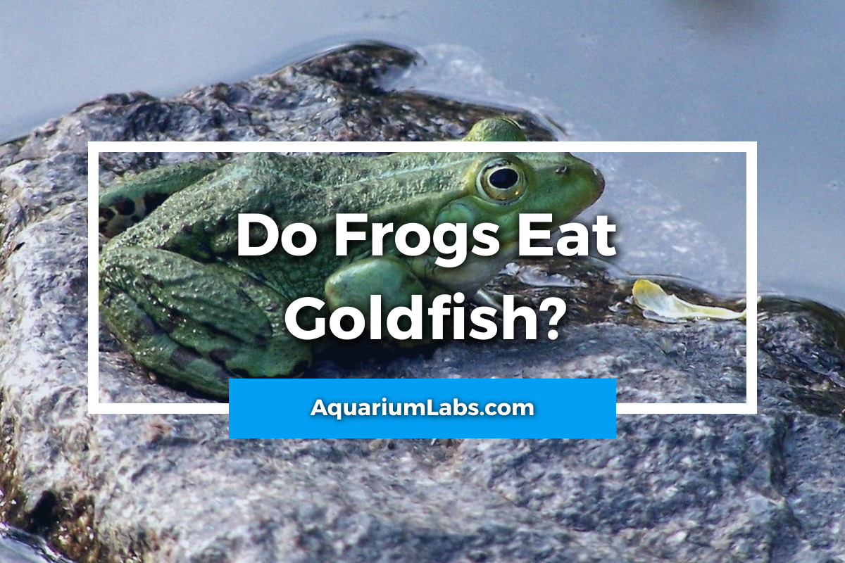 do frogs eat goldfish - featured image